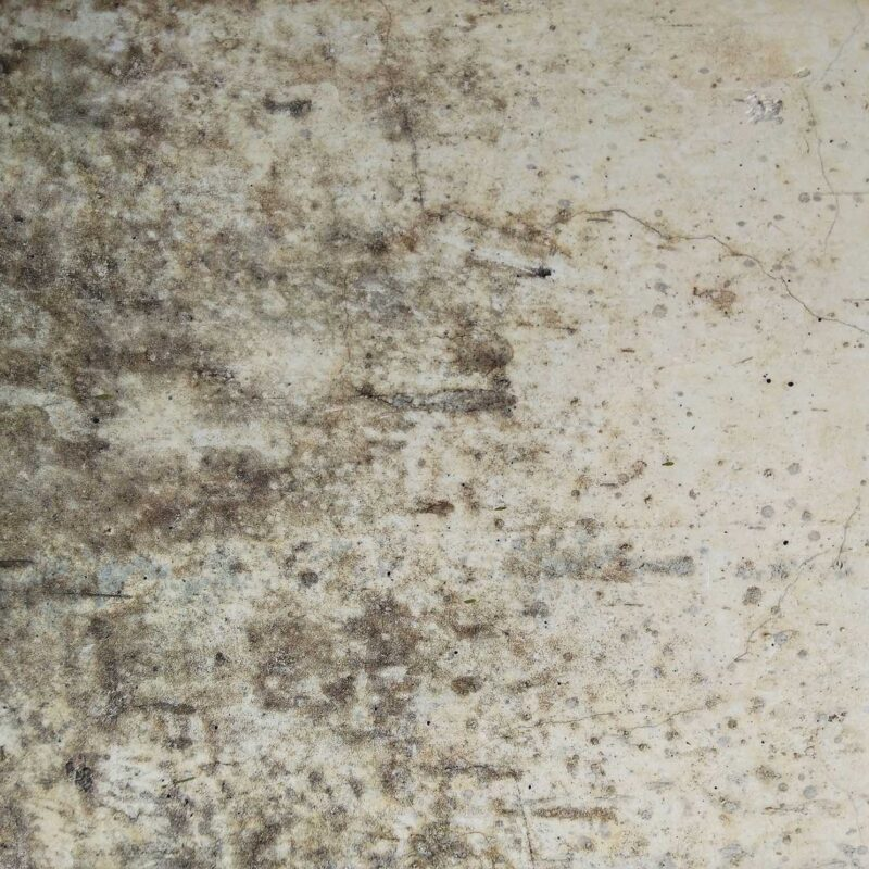 Mould Toxicity